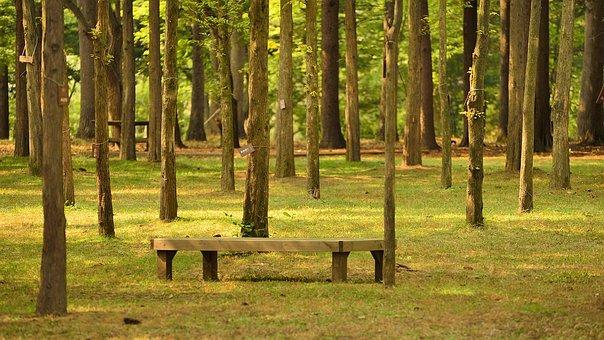 Namiseom Island, Namiseom Island Recreation Area, Tree
