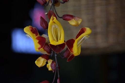 Nature, Summer, Flower, Spring, Rosa, Plant, Garden