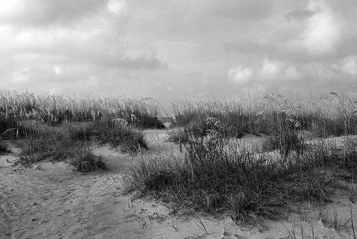 Sea Oats, Beach, Ocean, Landscape, Nature, Protected