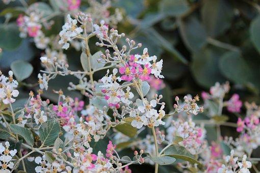 Plant, Flower, Nature, Flora, Spring, Flourish