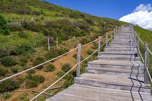 Stairs, Wood, Path, Landscape, Hill, Nature, Heather
