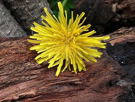 Petals Yellow, Wood, Yellow, Nature, Plant, Garden