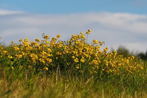 Pointed Flower, Flower, Nature, Flowers, Plant, Meadow