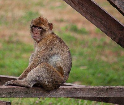 Monkey, Primate, Animal, Mammal, Animal World, Sit