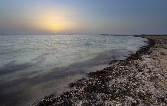Seascape, Doha, Qatar, Gulf, Beach, Shells, Seaweed