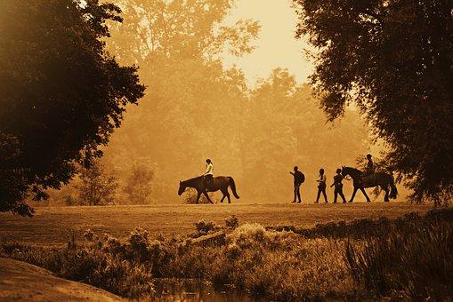 Horse, Animal, Rider, Horseback, Road, People
