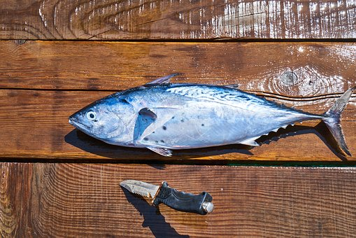 Fish, Food, Rope, Blue, Gourmet, Raw, Uncooked, Fresh