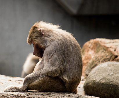 Monkey, Mammal, Animal, Animal World, Primate, Sitting