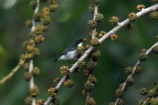 Small, Cute, Nature, Natural, Bird, Wild, Wildlife