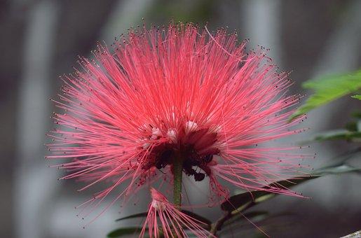 Flower, Plant, Flora, Nature, Beauty, Flourish, Summer