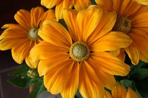 Flower, Summer, Sun, Nature, Flora, Yellow