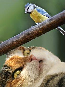 Hunt, Cat, Prey, Threat, Risk, Lurking, Fix, Staring At