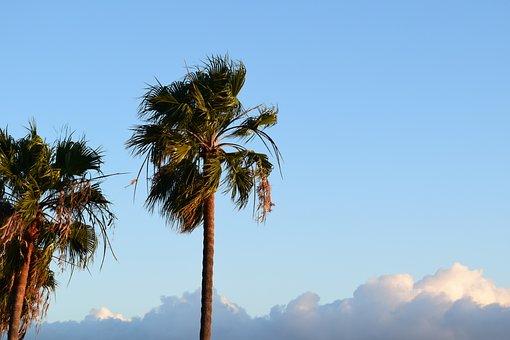 Malibu, Palm Trees, Sky, Beach, Palm, Nature, Tropical
