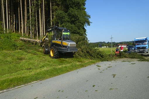 Cleanup, Tree, Uprooted, Road, Locked, Storm Damage