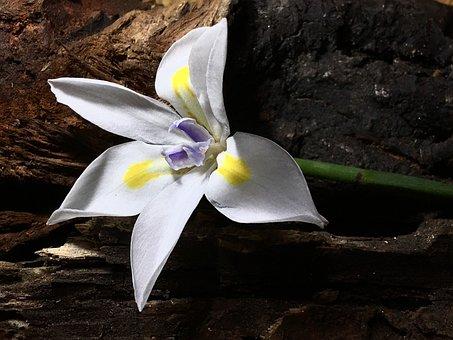 White Flower, White Petals, White, Flower, Petals