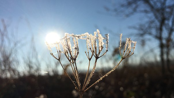 Ice, Ice Flowers, Frost, Winter, Cold, Hardest, Wintry