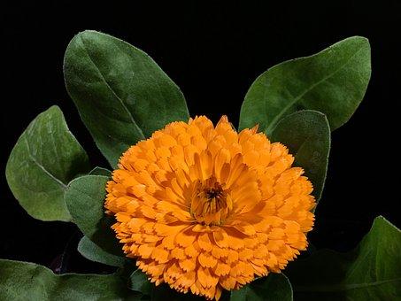 Yellow Flower, Petals Yellow, Flower, Yellow, Petals