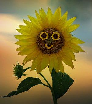 Sunflower, Smile, Yellow, Flower, Nature, Plant