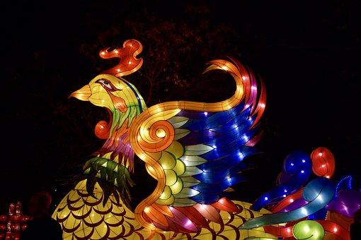 Phoenix, Bird, Firebird, Bright, Animal, Night