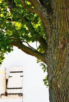 Oak, Tree, Nature, Leaves, Green, Background