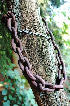 Tree, Chain, Rust, Barbed Wire, Wood, Risk Of Injury