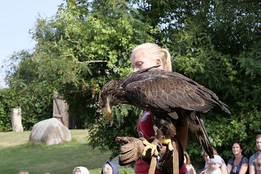 Animal World, Bird, White Tailed Eagle, Plumage, Raptor