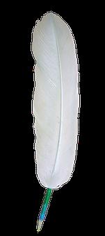 Eagle, Feather, White, Bird, Transparent, Bald-eagle