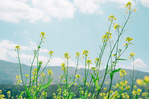Flowers, Natural, Blossom, Bloom, Summer, Plant, Garden