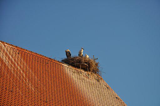Stork, Sky, Summer, Nature, Building, Romantic, Rest