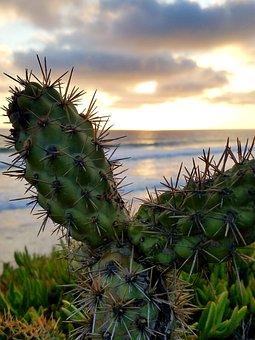 Cactus, Ocean, Sunset, Cacti, Clouds, Shore, Coast