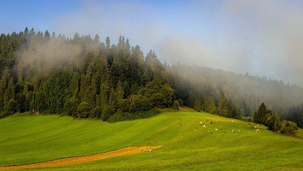 The Fog, Field, Landscape, In The Morning, Sky, Figure