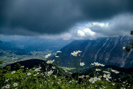 Nature, Flowers, Summer, Flora, Outdoor, Petals, Blue