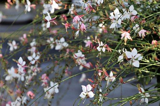 Delicate, Flower, Decorative, White, Flowers, Flora