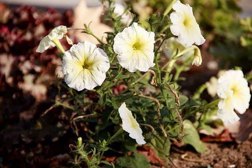 Flower Bed, Flowers, Spring, Bloom, Flora, Garden