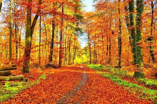 Golden Autumn, Golden, Autumn, Fall Foliage, Colorful