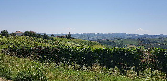 Vineyard, Vines, Vine, Wine, Nature, Grapes, Grapevine