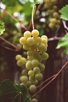 Grapes, Vine, Grapevine, Fruit, Winegrowing, Wine