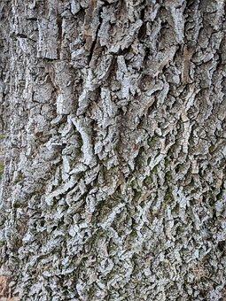 Tree Bark, Grey Gray, Texture, Background, Nature