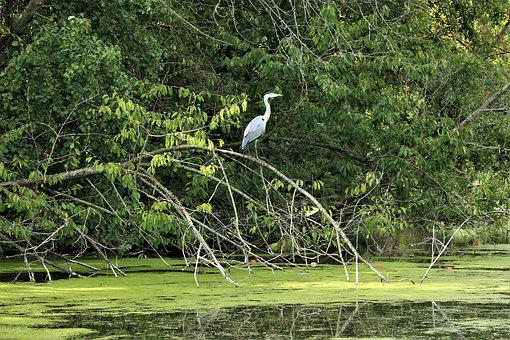Heron, Nature, Water Bird, Bank, Bird