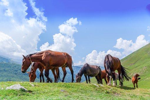 Horse, Foal, Meadow, Green Grass, Mountains, Sky