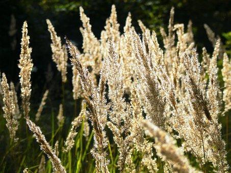 Dry, Grass, Nature, Meadow, Summer, Herbs, Light, Sun