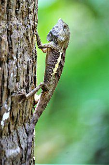 Gecko, Tree, Nature, Lizard, Reptile, Animal World
