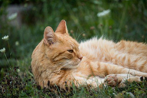 Cat, Domestic Cat, Animal World, Mammal, Animal, Meadow