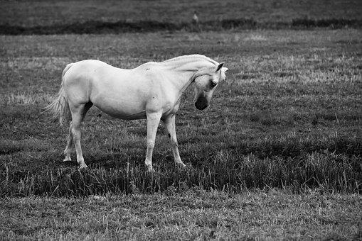 Horse, Animal, Mammal, Standing, Pasture, Meadow