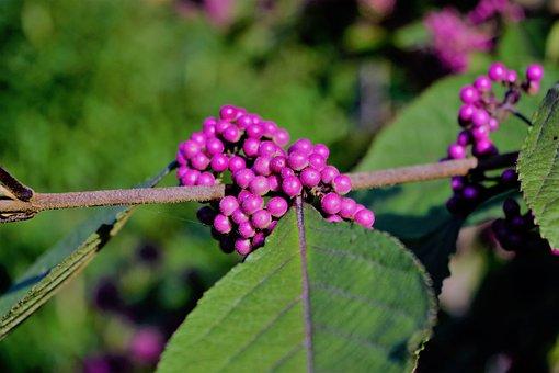 Nonpareils, Branch, Leaf, Nature, Bush, Sprinkles Shrub