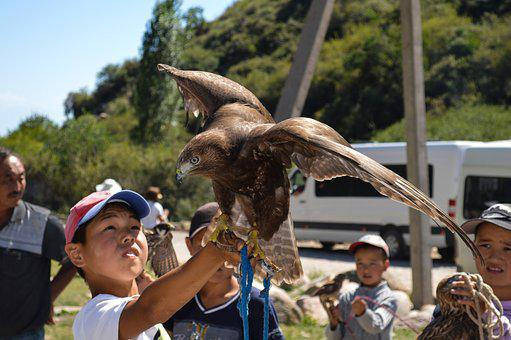 Kids, Falcon, Eagle, Nature, Baby, Carnivorous, Play