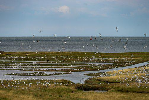 Nature, Landscape, Northern Germany, Cuxhaven, Birds