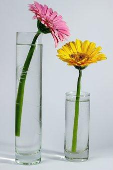 Gerbera, Flowers, Pink, Yellow, Vases, Blossom, Bloom