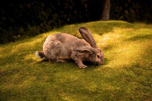 Rabbit, Grass, Green, Brown, Nature, Animal, Wild, Cute