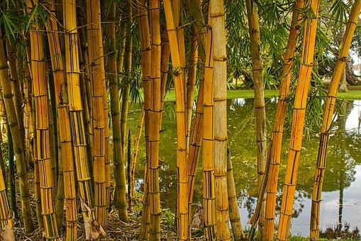 Landscape, Nature, Lake, Reeds, Water, Reflection